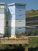 Honey Bees at Lavender Hill Farms