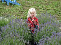 Visitor Tours at Lavender Hill Farms